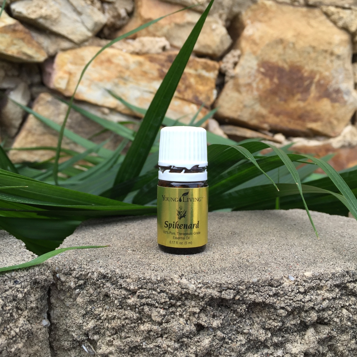 Essential Oils & God's Word | Spikenard